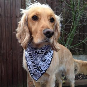 Newspaper Dog Bandana