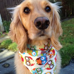 Owl Dog Bandana