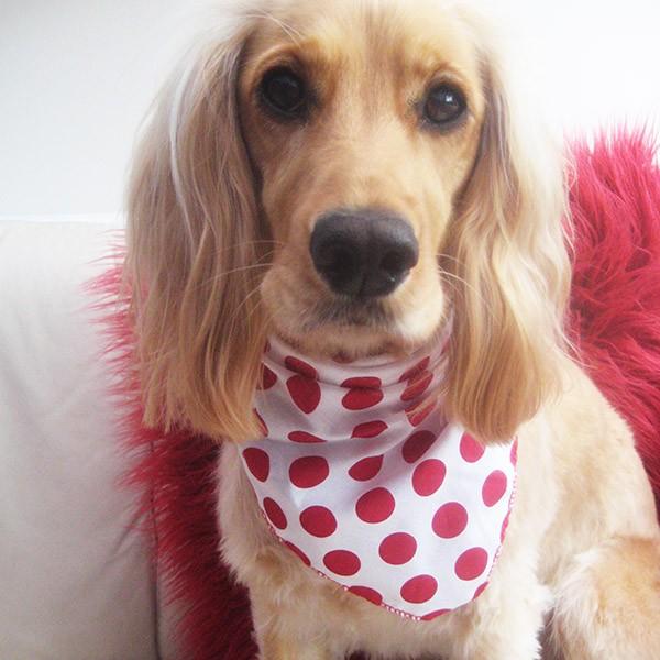 Polka Dot Dog Bandana