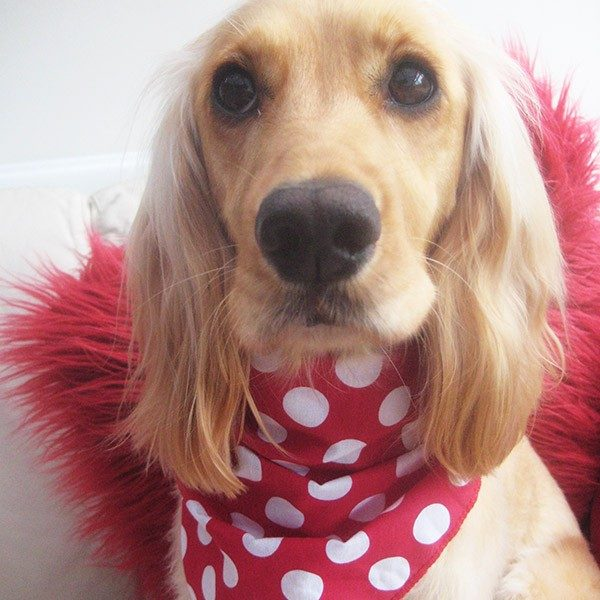 Polka Dot Dog Bandana