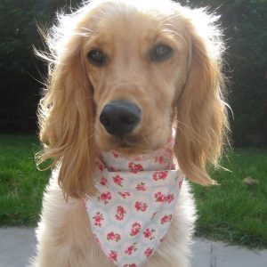 Provence Rose Pale Blue Dog Bandana