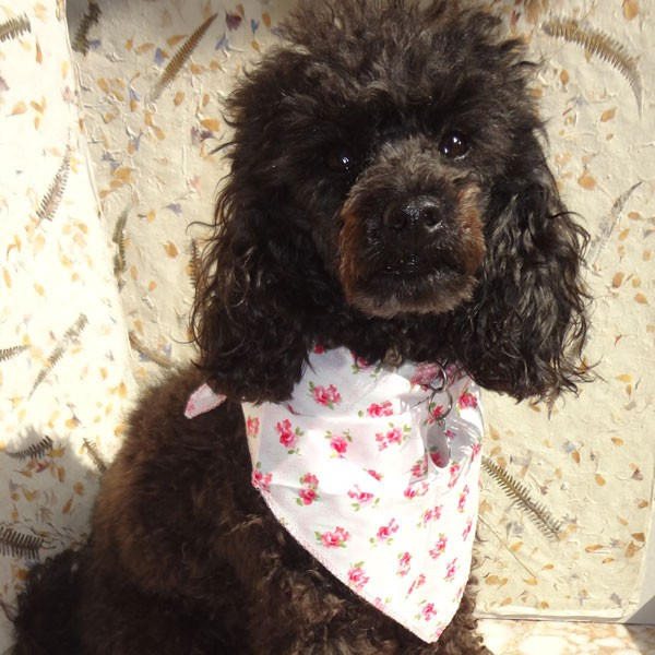 Provence Rose Pink Dog Bandana