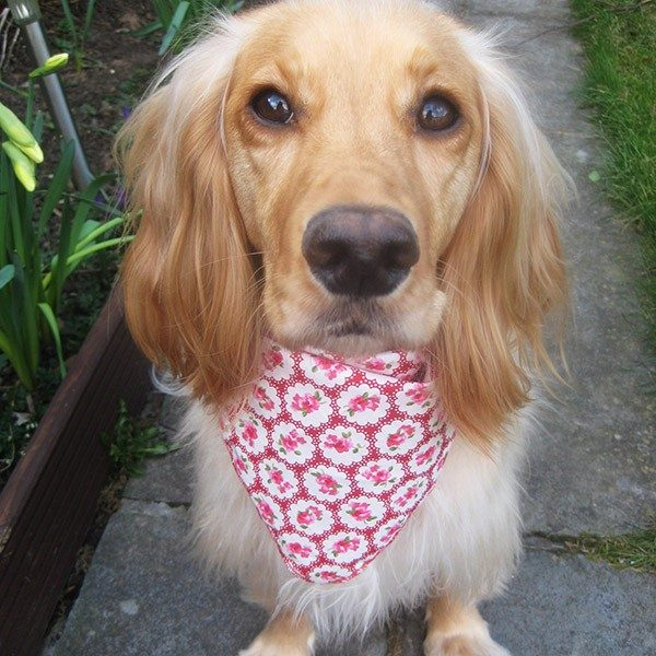 Provence Rose Dog Bandana in Red