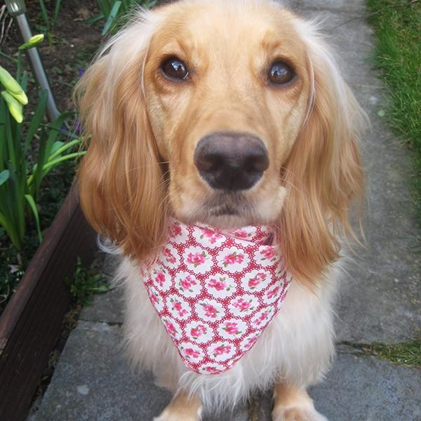 Provence Rose Dog Bandana in Red