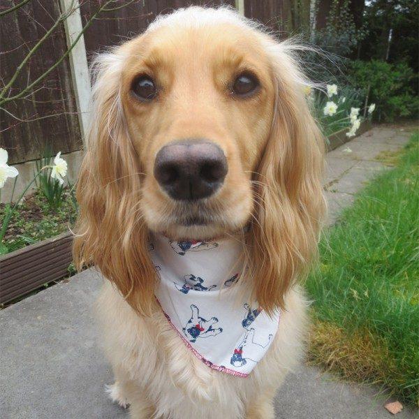 Pugs Dog Bandana