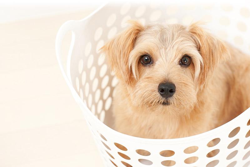Dog Bandana Care Guidelines