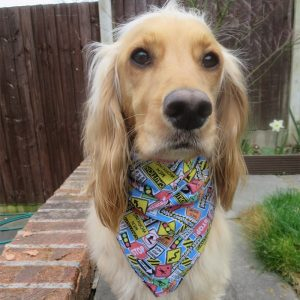 Roadworks Dog Bandana