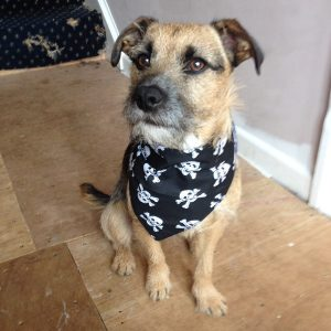 Skull and Crossbones Dog Bandana
