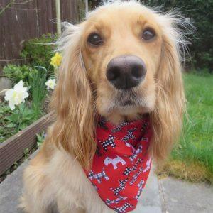 Stanley Dog Dog Bandana
