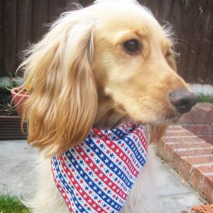 Stars and Stripes Dog Bandana