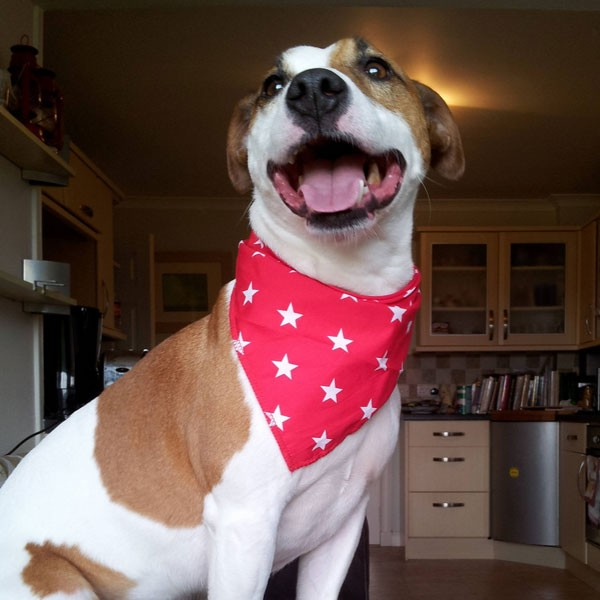 Red Stars Dog Bandana