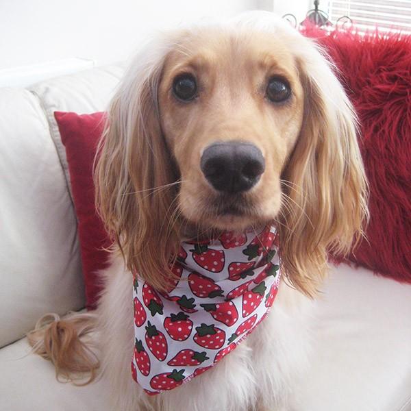Strawberry Jam Dog Bandana