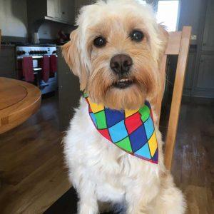 Harlequin Dog Bandana from Puppy Bandana