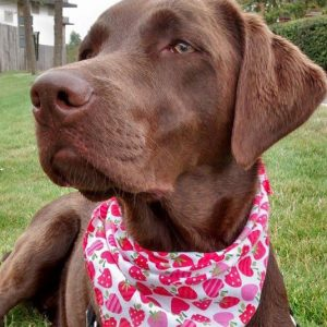 Tooty Fruity Dog Bandana