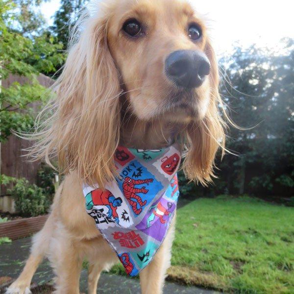 Trick or Treat Halloween Dog Bandana