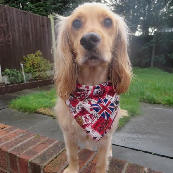Union Jack EU Souvenirs Dog Bandana