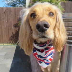 Union Jack Flags Dog Bandana