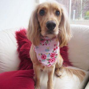 Vintage Rose Pink Dog Bandana