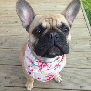 Vintage Rose Pink Dog Bandana