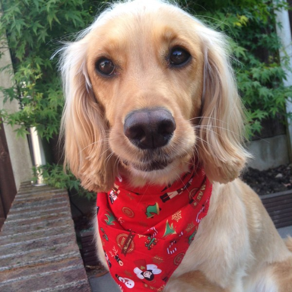 Christmas Cracker Dog Bandana