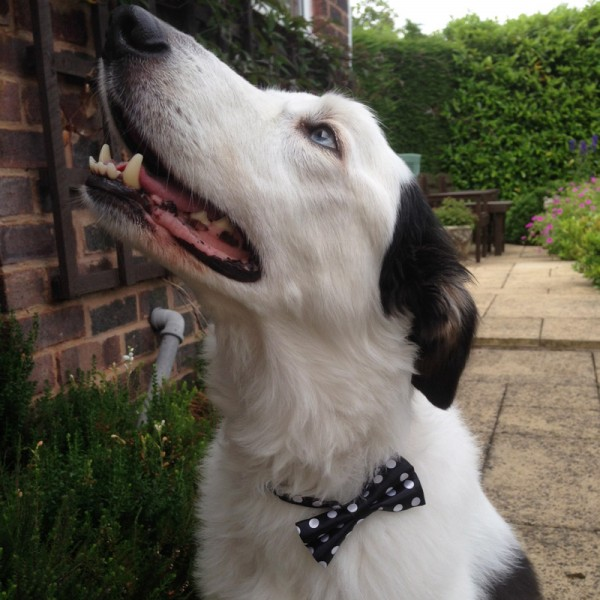 Black and White Spotty Bow Tie