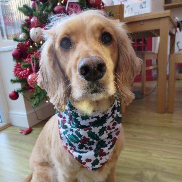 Christmas Holly Dog Bandana