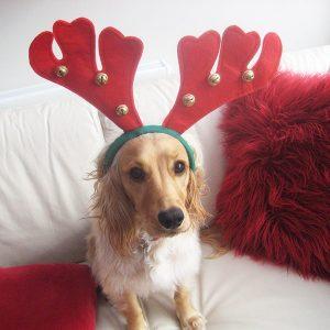 Christmas Stockings Dog Bandana