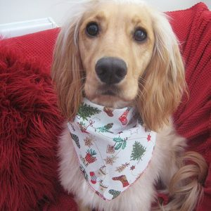Christmas Stockings Dog Bandana