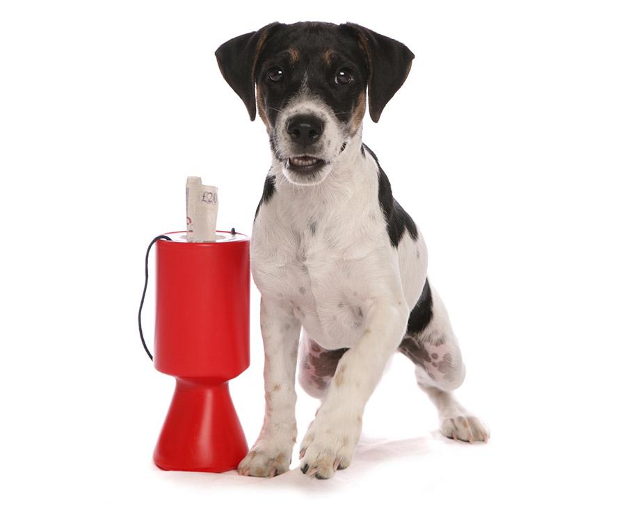 Dog Bandana for charity