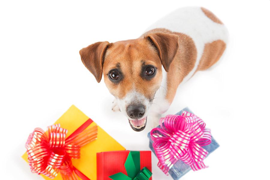 Dog Bandanas for Gift Shops Trade prices