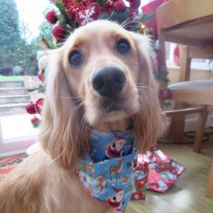 Festive Furry Friends Dog Bandana