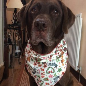 Proper Crimbo Dog Bandana