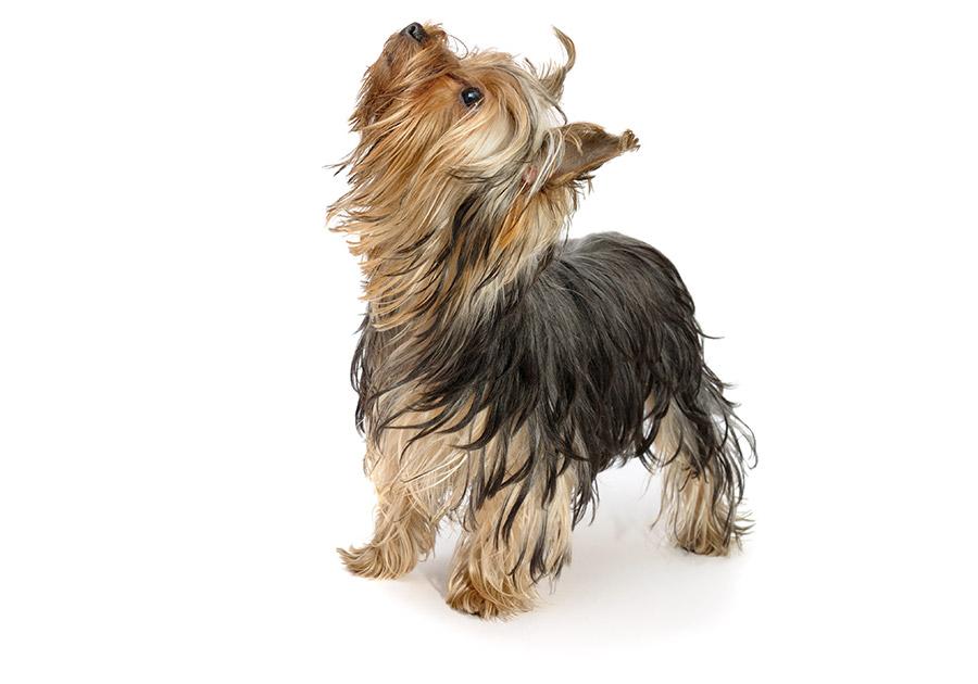 Dog Bandanas for Dog Training Schools