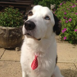 Red Spotty Tie for dogs
