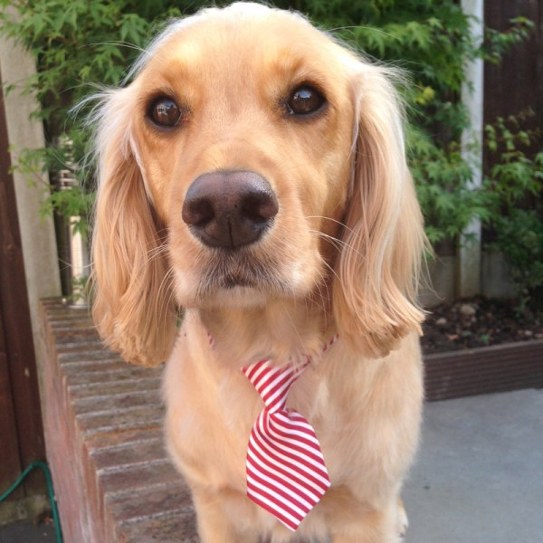 Red and White Stripey Tie