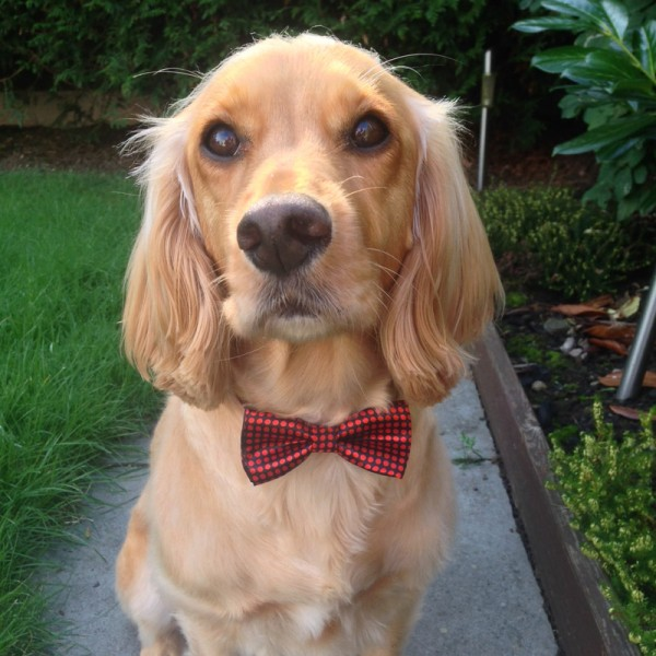 Ruby Dickie Bow