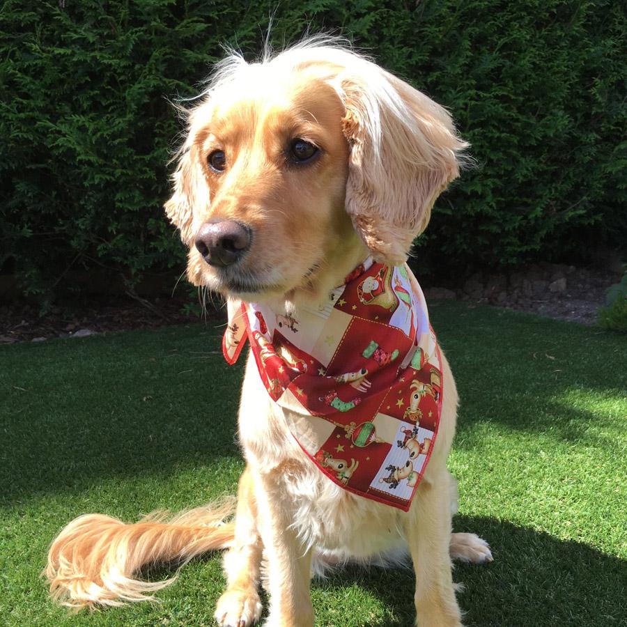 Santa's Sleigh Christmas Dog Bandana