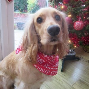 Seasons Greetings Dog Bandana