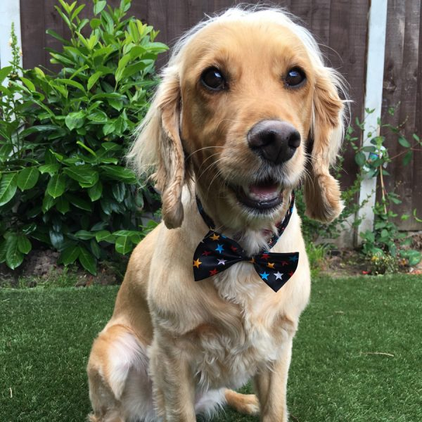 Starry Bow Tie for Dogs