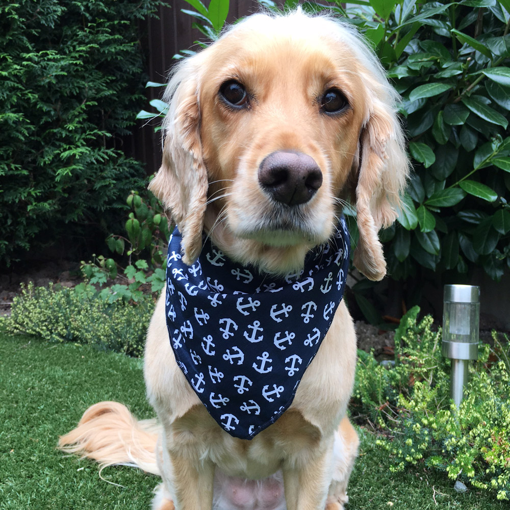 Navy Anchors Dog Bandana