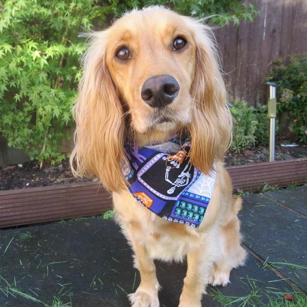 Halloween for hounds dog bandana