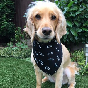 Music Notes Dog Bandana