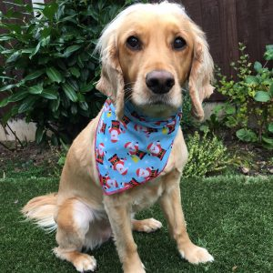Santa Claus Dog Bandana Blue