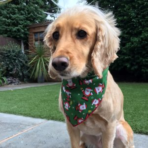 Santa Claus Green Dog Bandana
