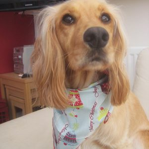 Jingle Bells Dog Bandana