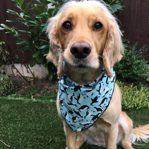 Penguins Dog Bandana