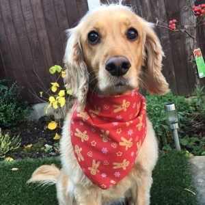 The Gingerbread Man Dog Bandana