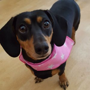 Bright Pink Stars Dog Bandana