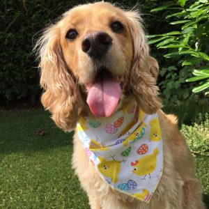 A Cracking Good Easter Dog Bandana