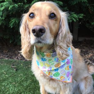Easter Eggs Dog Bandana from Puppy Bandana